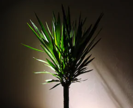 RPC_Yucca.PNG