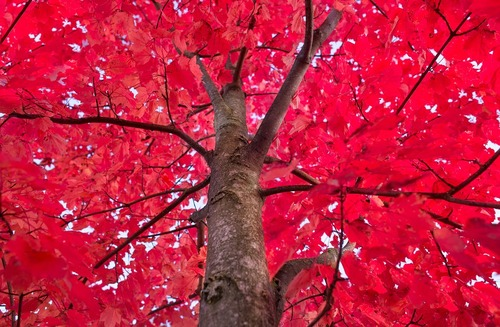 RedTrees