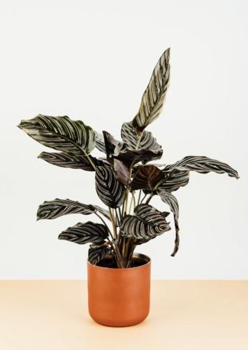 plantgang